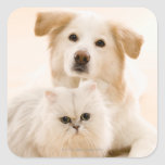 Estudio tirado de gato y de perro pegatina cuadrada
