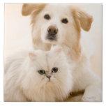 Estudio tirado de gato y de perro teja cerámica