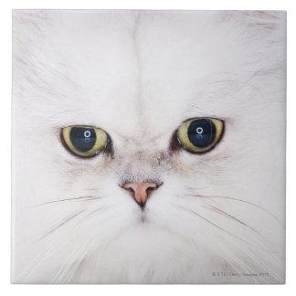 Estudio tirado del gato persa blanco azulejo cuadrado grande