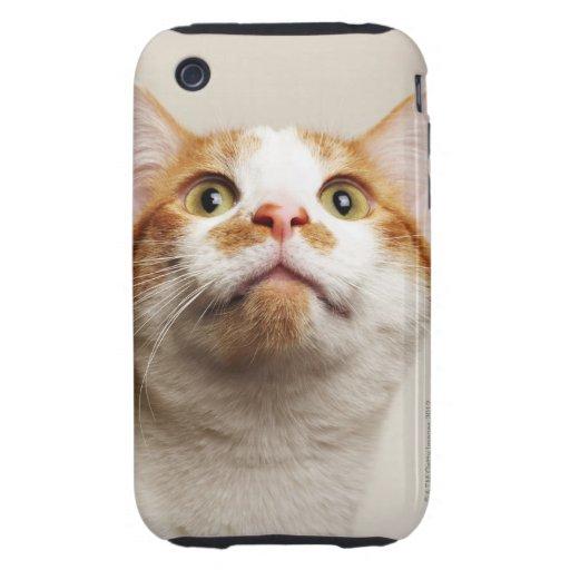 Estudio tirado del gato que mira para arriba tough iPhone 3 cárcasas