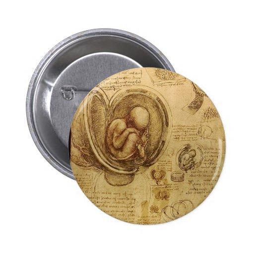Estudios de embriones pin