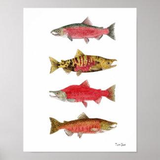 Estudios de la acuarela de salmones póster