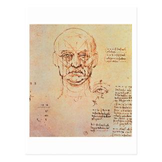 Estudios de las proporciones de la cara y del ojo, postales