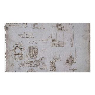 Estudios de Leonardo Vinci- del chalet Melzi Plantilla De Tarjeta Personal