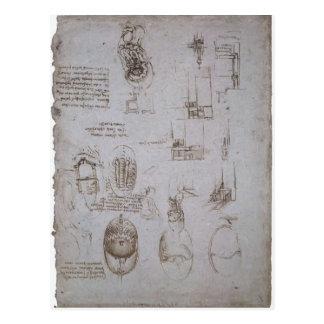 Estudios de Leonardo Vinci- del chalet Melzi Postales