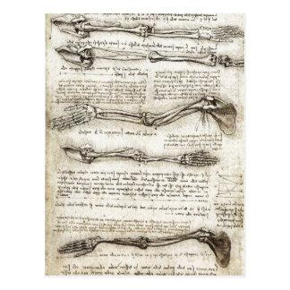 Estudios del brazo que muestra los movimientos hec postal