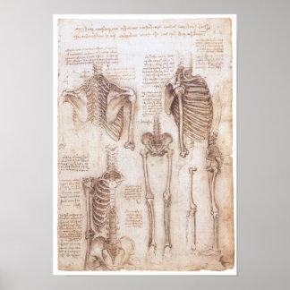 Estudios esqueléticos, Leonardo da Vinci, 1510 Póster