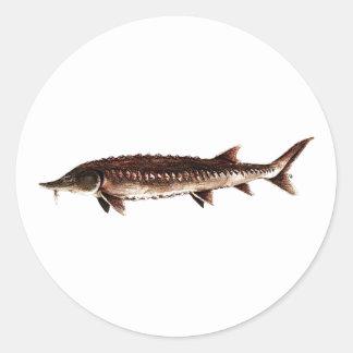 Esturión atlántico - oxyrinchus del Acipenser Pegatina Redonda