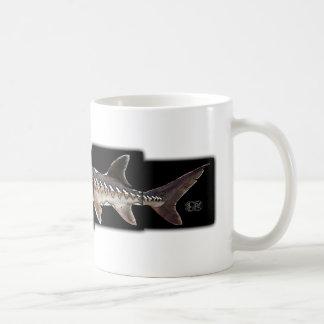 Esturión atlántico - oxyrinchus del Acipenser Taza Básica Blanca