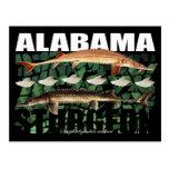 Esturión-Collage-Postal de Alabama