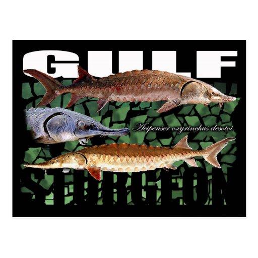 Esturión-Collage-Postal del golfo