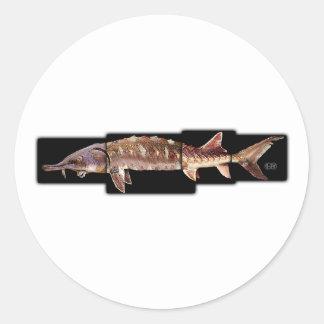 Esturión del golfo - desotoi del oxyrinchus del pegatina redonda