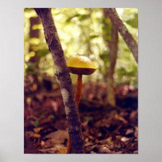 ET-The Shy Mushroom Poster