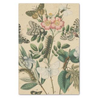 Etapas de la vida de la mariposa por el estudio de papel de seda pequeño