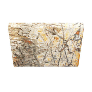 Etched Bark Canvas Print