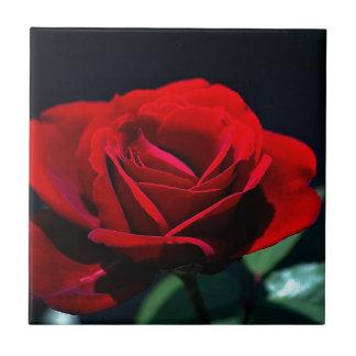 Eternal love Rose Tile