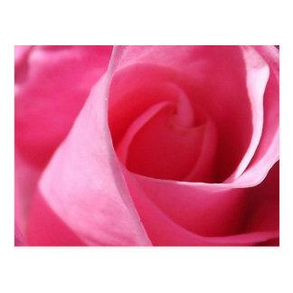 Eternal Pink Postcard