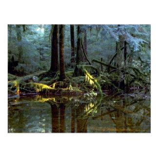 Ethereal pool in forest, Stillaguamish River, Wash Postcard
