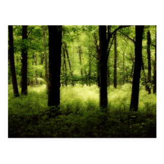 Ethereal Summer Woods Postcards