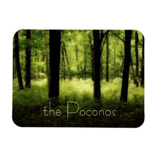 Ethereal Summer Woods Rectangle Magnet