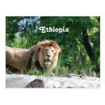 Ethiopia Lion Postcard
