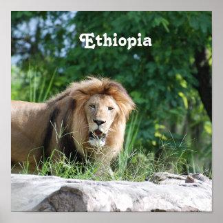 Ethiopia Lion Posters