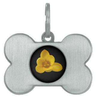 Etiqueta amarilla del mascota del azafrán placas mascota