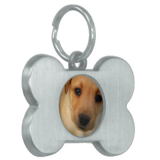 Etiqueta amarilla del mascota del perrito del labo placa de mascota