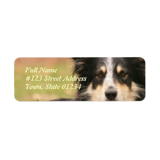Etiqueta australiana del remite del perro de pasto etiquetas de remite