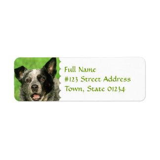 Etiqueta australiana del remite del perro del etiquetas de remite