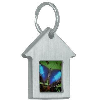 Etiqueta azul del mascota de la mariposa del ala placas mascota