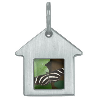 Etiqueta bonita del mascota de la mariposa de placa mascota