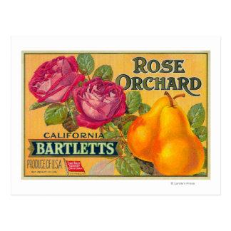 Etiqueta color de rosa del cajón de la pera de la postal