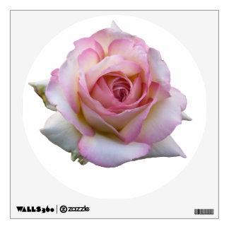 Etiqueta color de rosa rosada de la pared