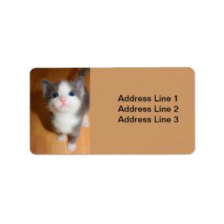Etiqueta curiosa linda del gatito etiqueta de dirección