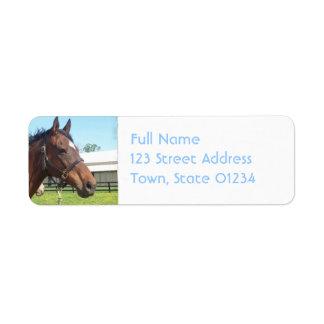 Etiqueta de correo árabe alerta del caballo etiqueta de remite