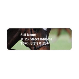 Etiqueta de correo árabe linda del caballo etiqueta de remite