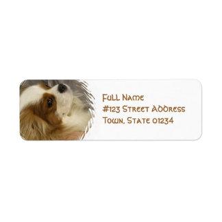 Etiqueta de correo arrogante del perro de aguas de etiquetas de remite