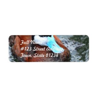 Etiqueta de correo cargada en cuenta azul del pato etiqueta de remite