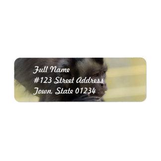 Etiqueta de correo copetuda del mono del capuchón etiquetas de remite