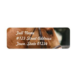Etiqueta de correo cuarta dulce del caballo etiquetas de remite