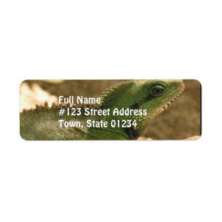 Etiqueta de correo de las fotos de la iguana etiqueta de remite