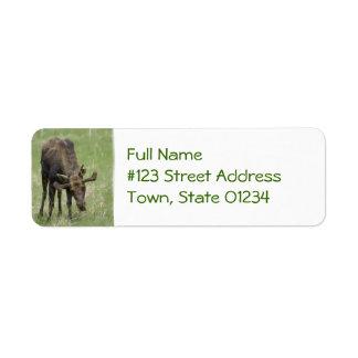 Etiqueta de correo de los alces de Bull Etiquetas De Remite