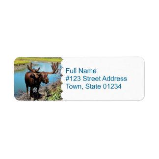 Etiqueta de correo de los alces etiqueta de remite
