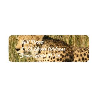 Etiqueta de correo de vagabundeo del guepardo etiqueta de remite