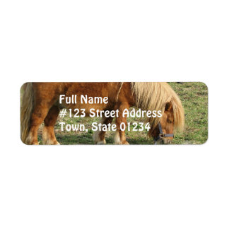 Etiqueta de correo del caballo de la castaña etiqueta de remite
