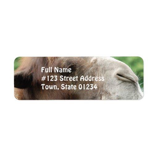 Etiqueta de correo del camello árabe etiqueta de remite