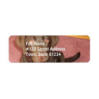 Etiqueta de correo del perrito de Labrador del Etiqueta De Remite