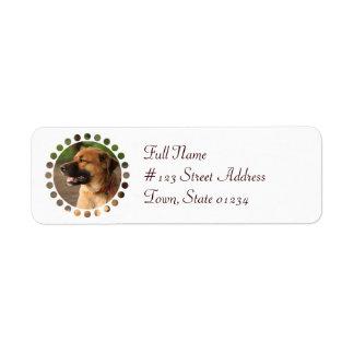 Etiqueta de correo del perro de Akita del alemán Etiquetas De Remite
