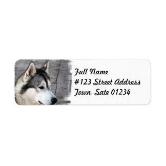 Etiqueta de correo del perro del Malamute Etiquetas De Remite